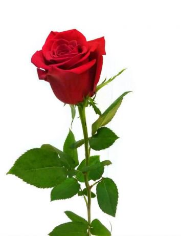 coroane aranjamente florale sicriu oradea servicii funerare apusul